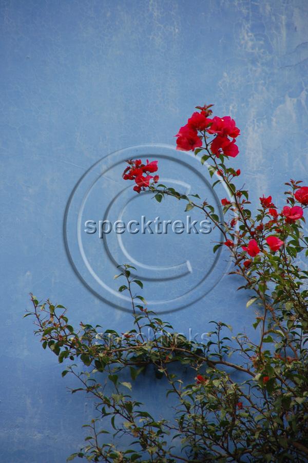 Chiapas Flowers Sarah Peck