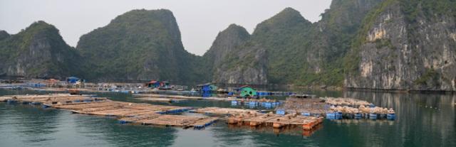Fishing village Ha Long Bay